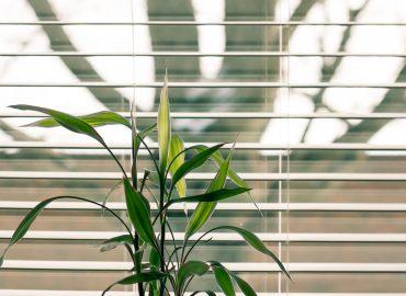 Rolety a žalúzie ako ochrana pred slnečnými lúčami
